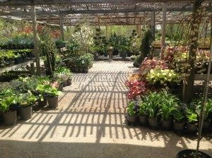 landscaping, faux rocks, home decor, ornamental tree, ornamental shrubs, plants, flowers, flowering shrubs